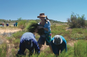 Arlette aiuta a raccogliere il rooibos