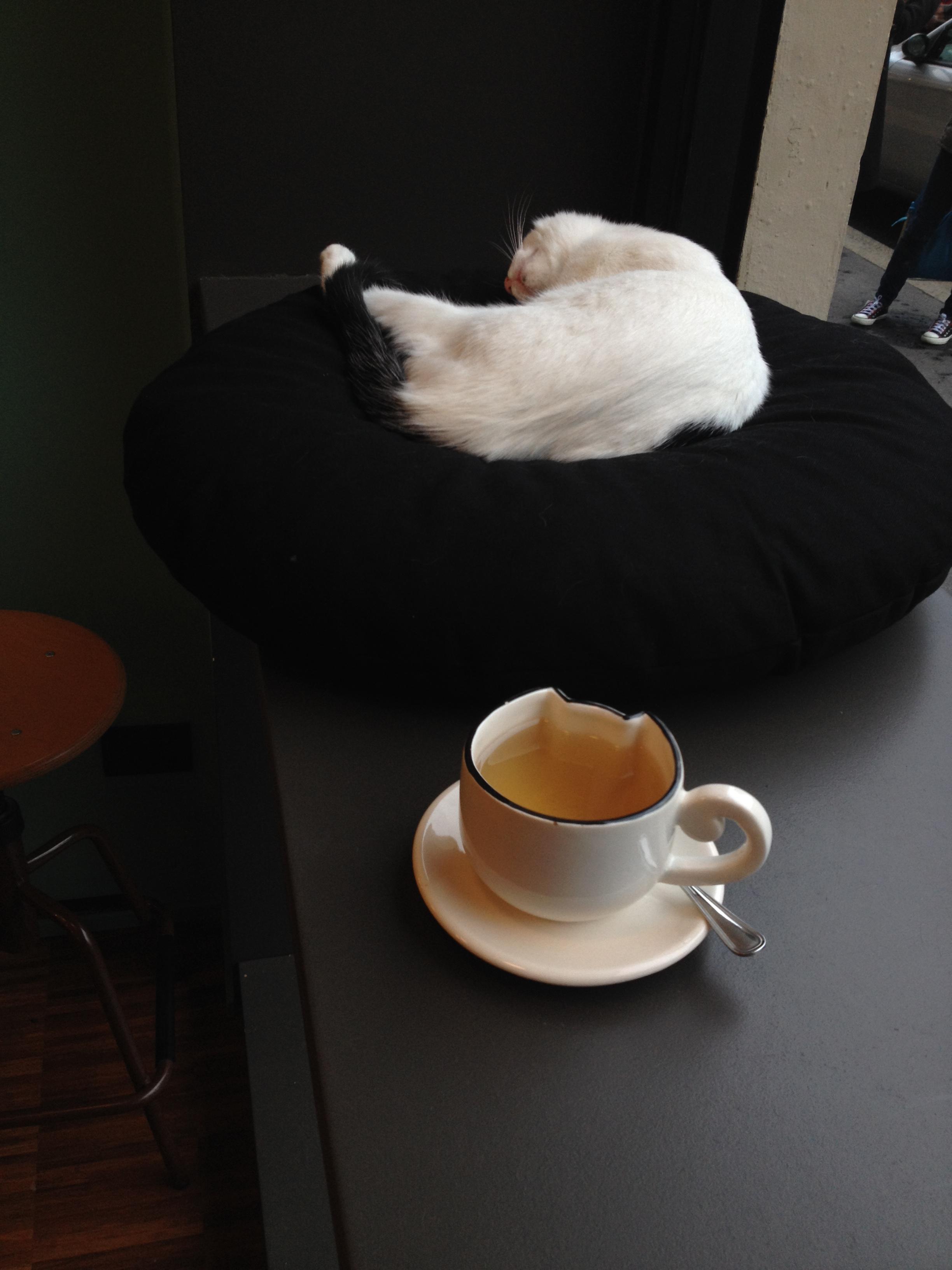 Cat Cafe Milano Menu