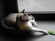 I gatti del Crazy Cat Café di Milano