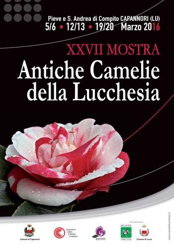 Eventi di marzo sul tè: mostra antiche camelie della Lucchesia e la piantagione di tè in Italia