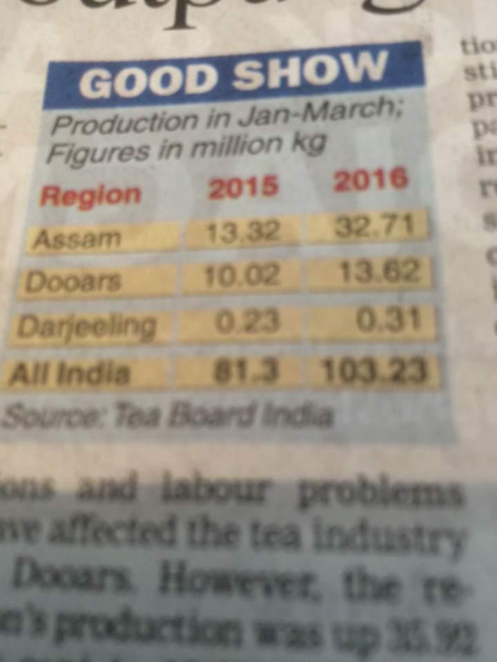 I nuovi raccolti di Darjeeling